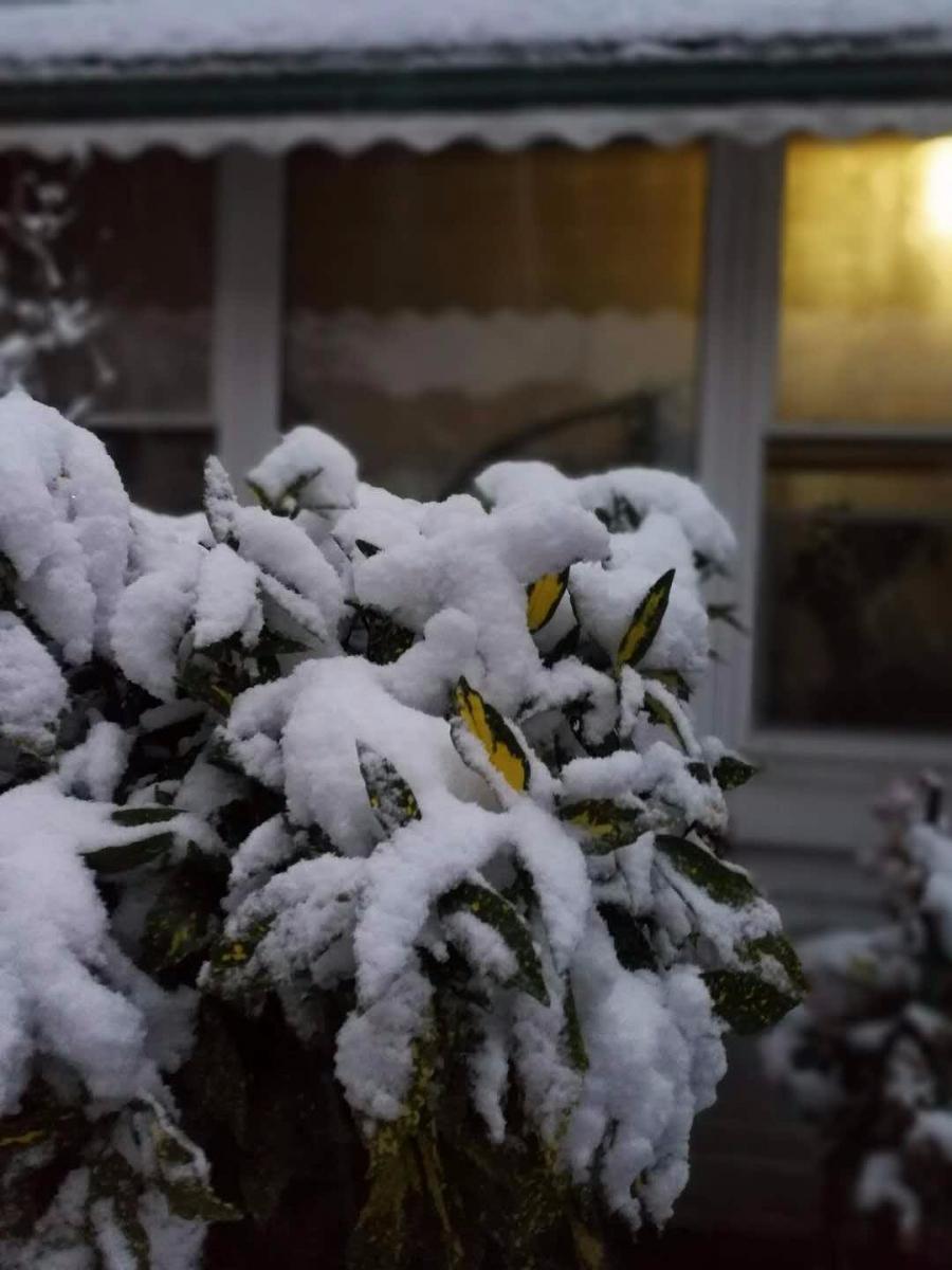 2017年的第一场雪_图1-6