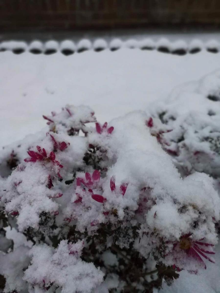 2017年的第一场雪_图1-7