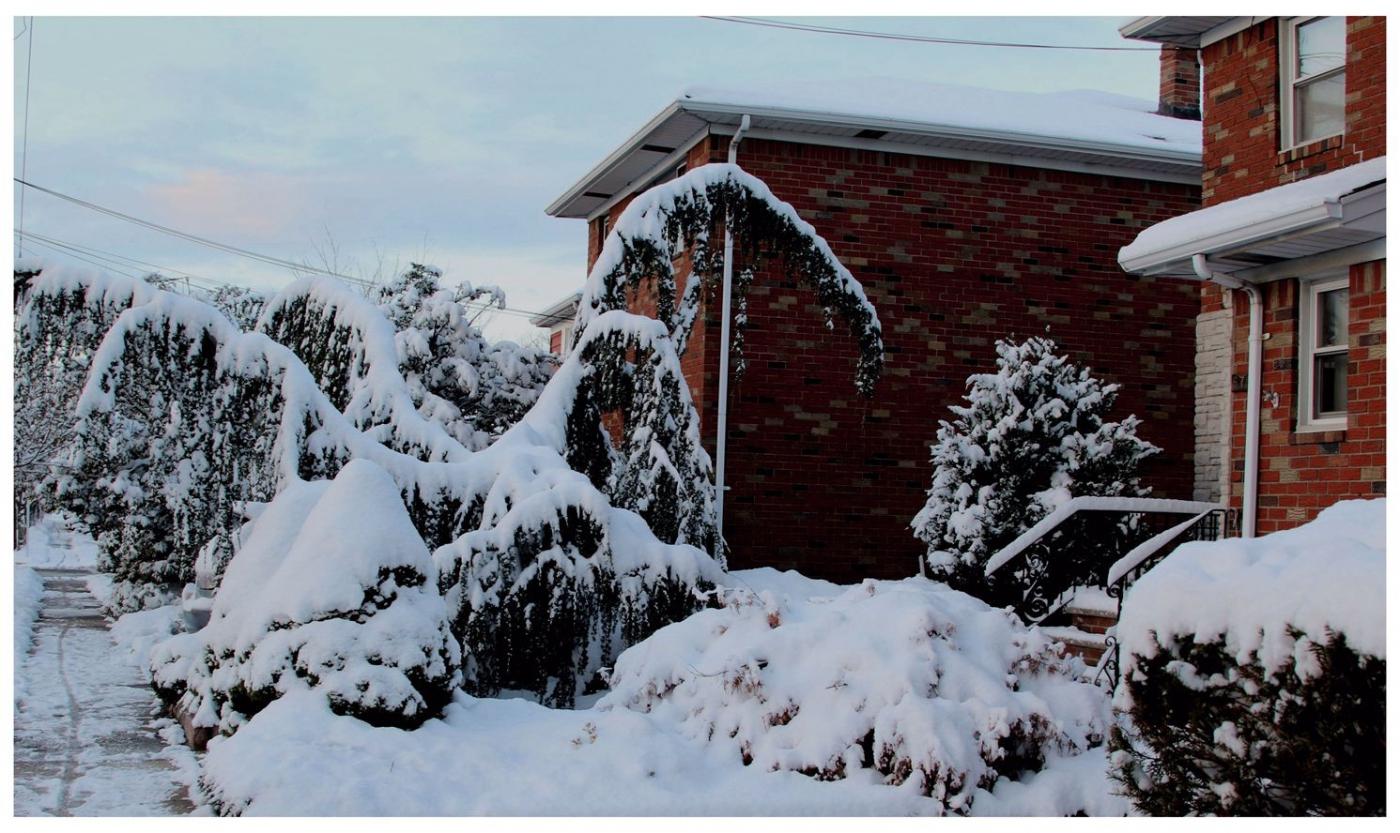 纽约地区入冬首雪景色迷人_图1-5