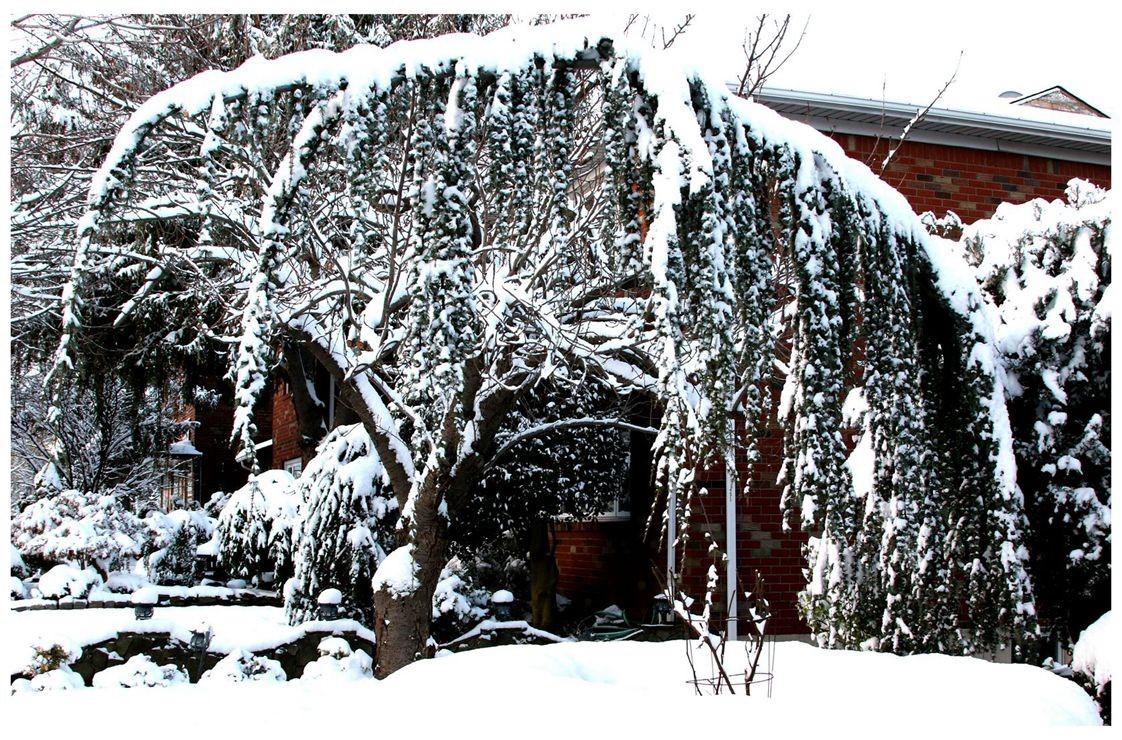 纽约地区入冬首雪景色迷人_图1-4