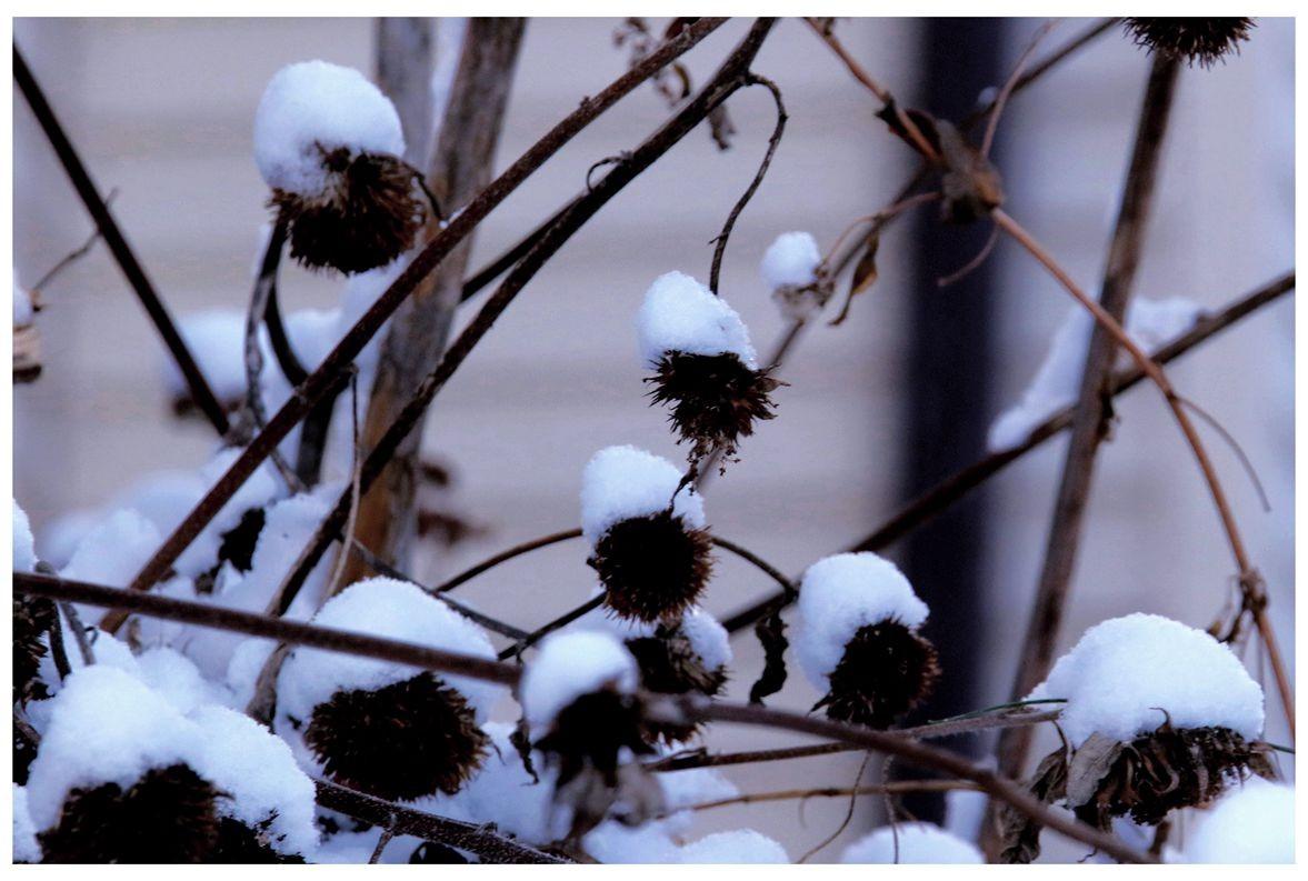 纽约地区入冬首雪景色迷人_图1-9