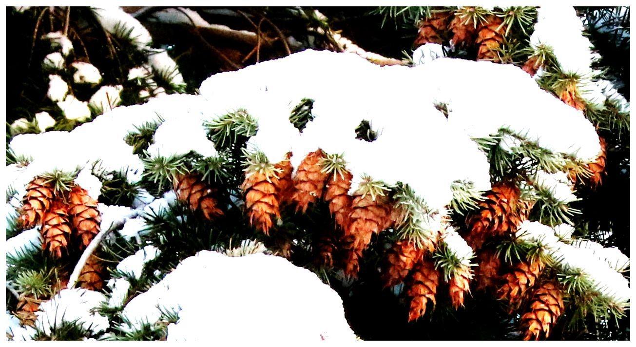 纽约地区入冬首雪景色迷人_图1-11