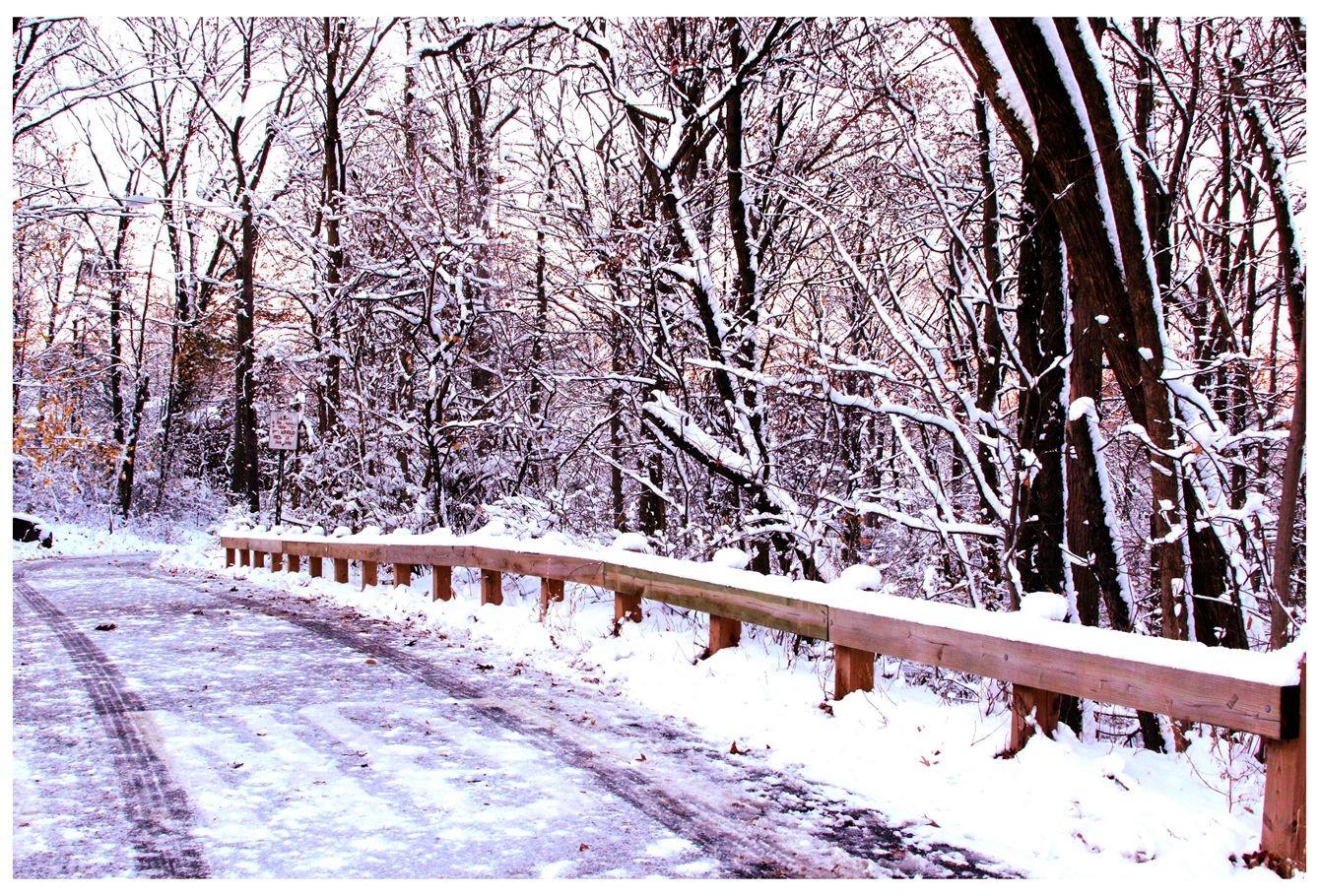 纽约地区入冬首雪景色迷人_图1-14