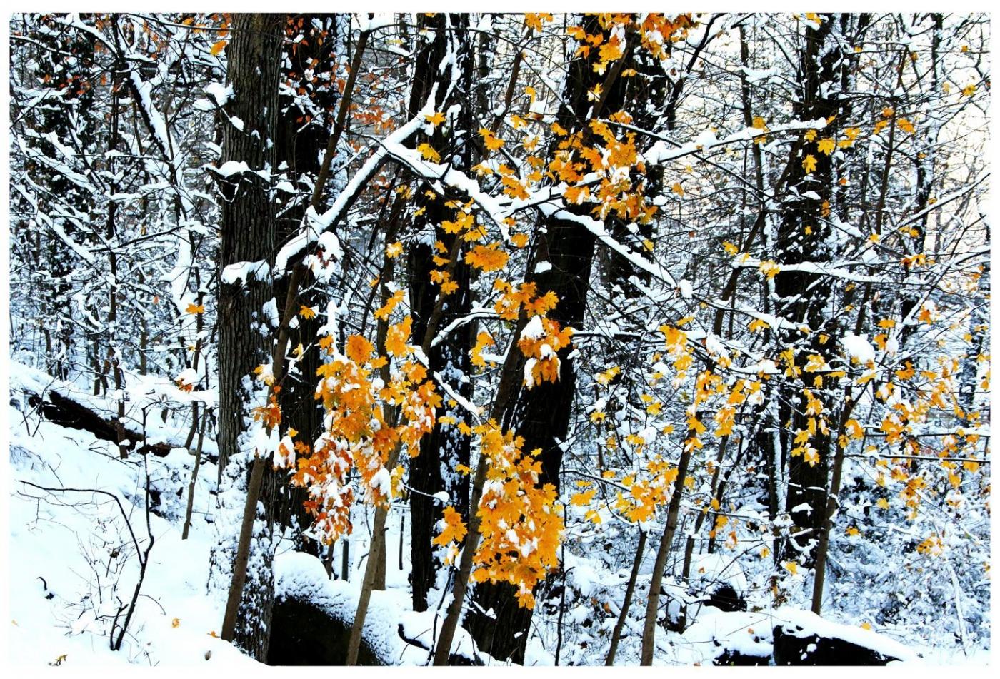纽约地区入冬首雪景色迷人_图1-16