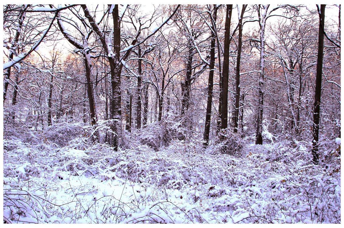 纽约地区入冬首雪景色迷人_图1-15