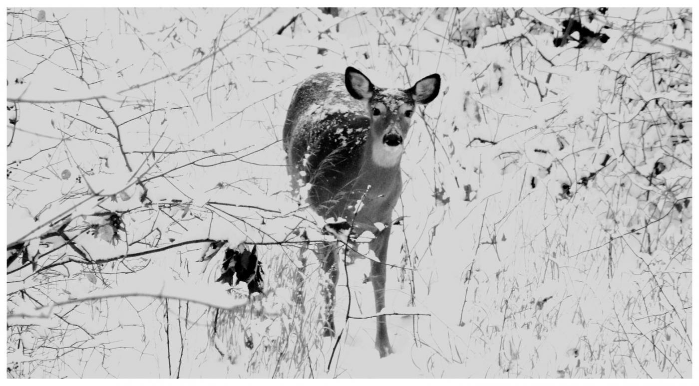纽约地区入冬首雪景色迷人_图1-17