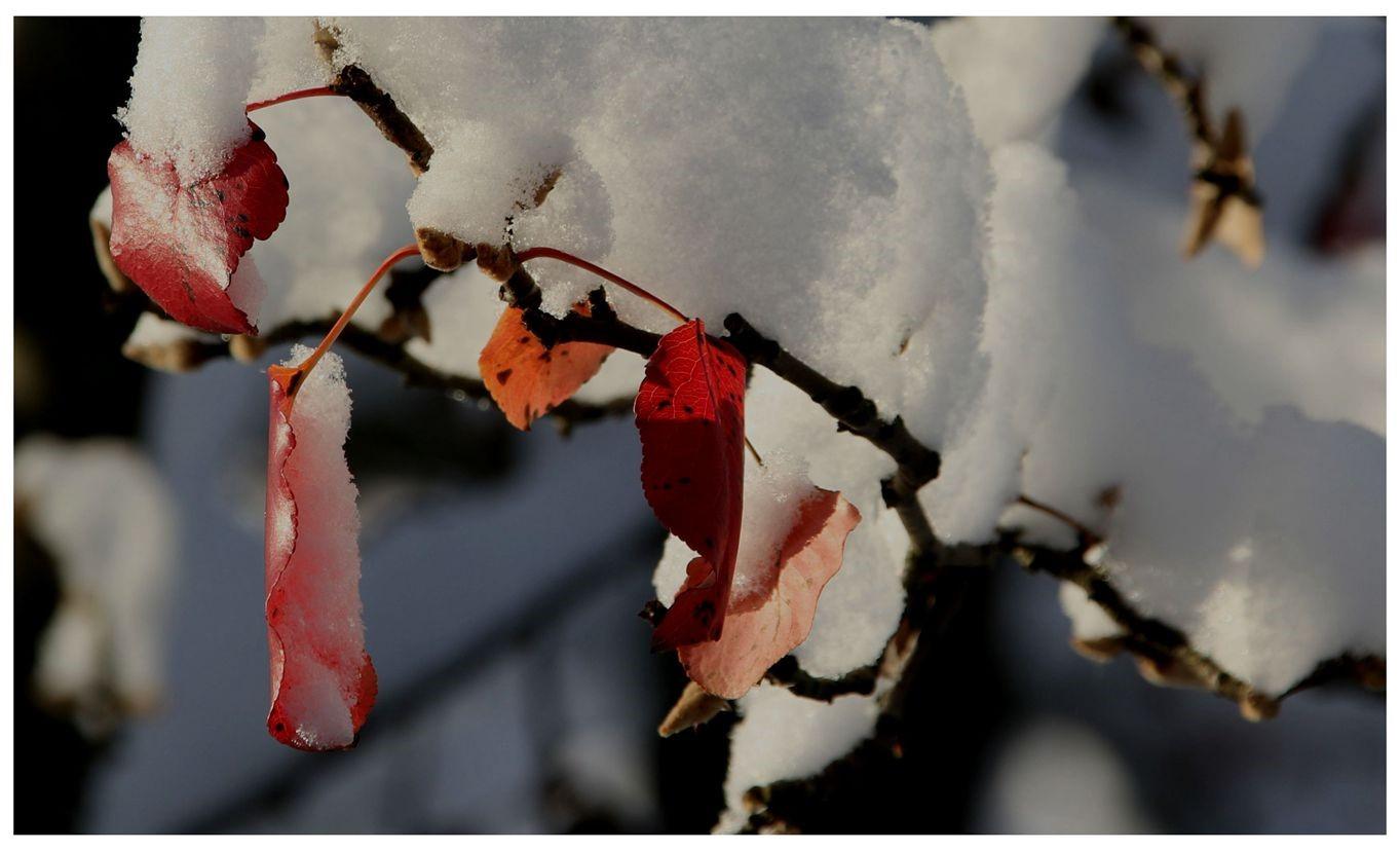 纽约地区入冬首雪景色迷人_图1-21