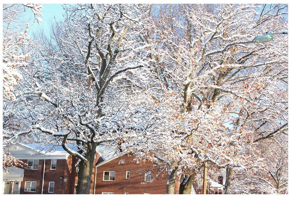 纽约地区入冬首雪景色迷人_图1-18