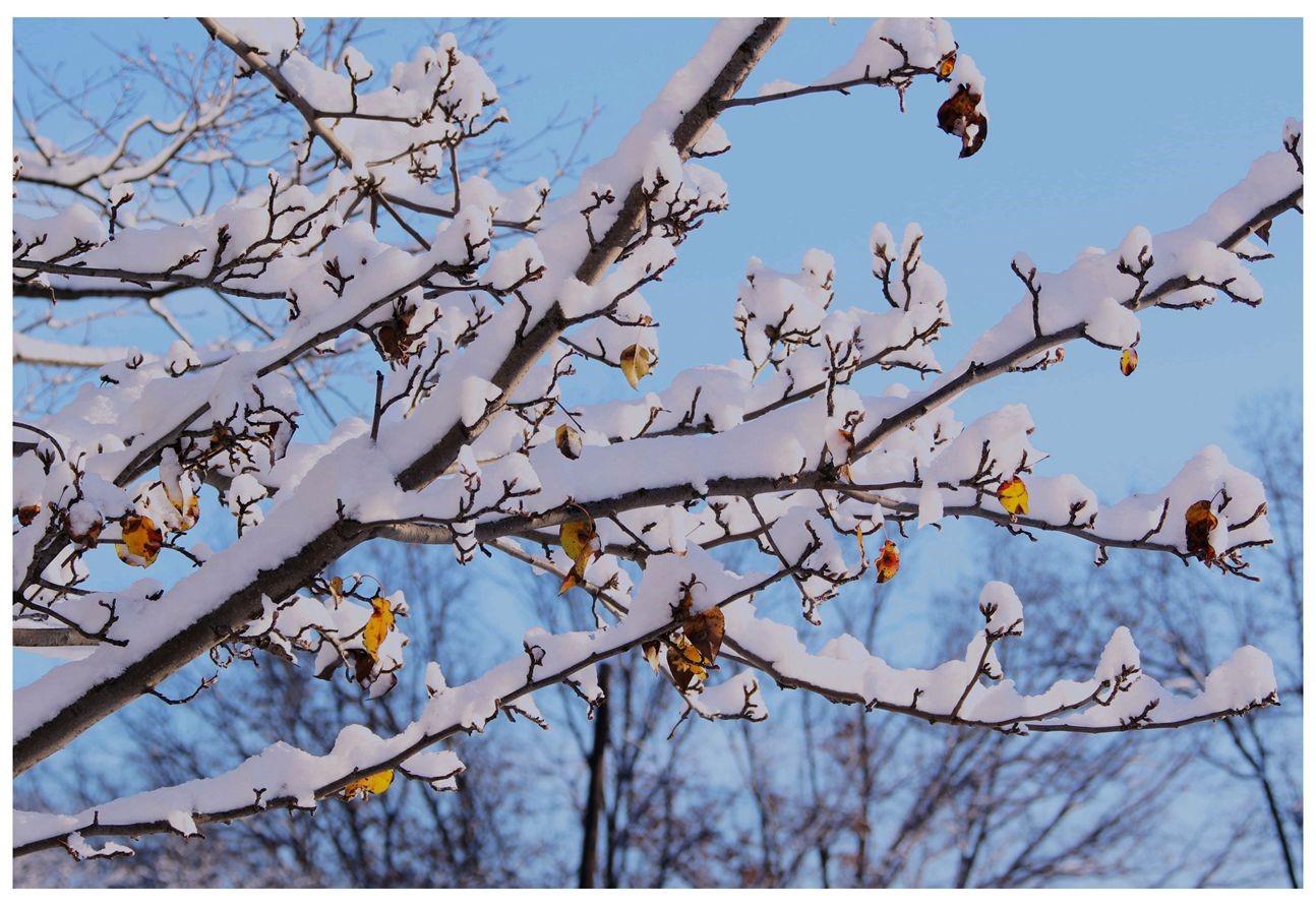 纽约地区入冬首雪景色迷人_图1-22