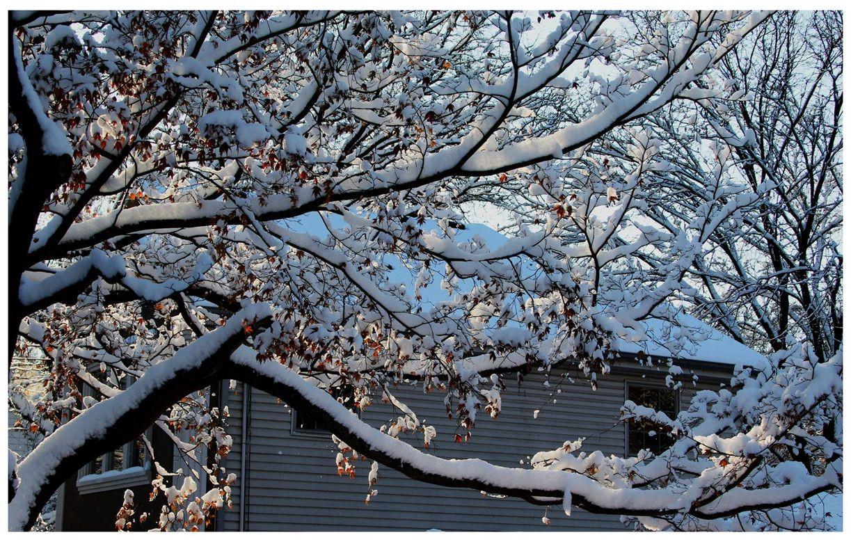 纽约地区入冬首雪景色迷人_图1-26