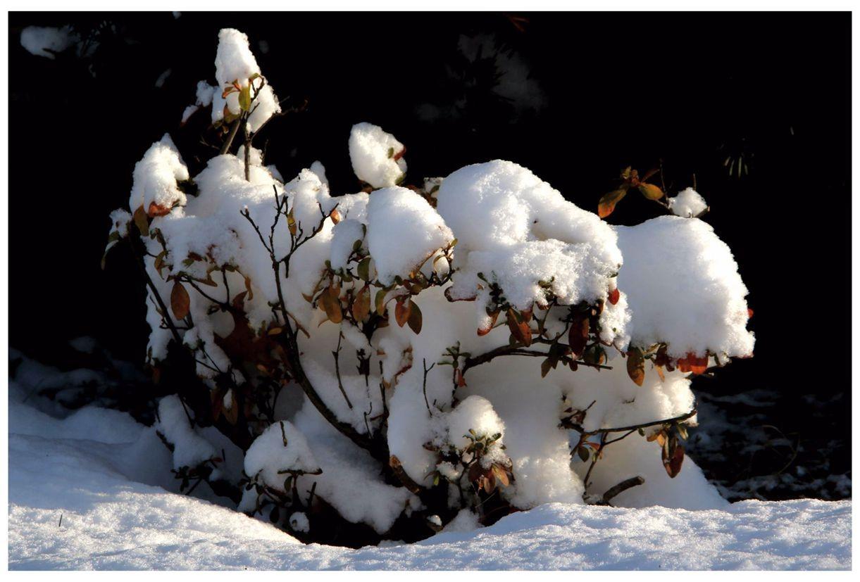 纽约地区入冬首雪景色迷人_图1-25