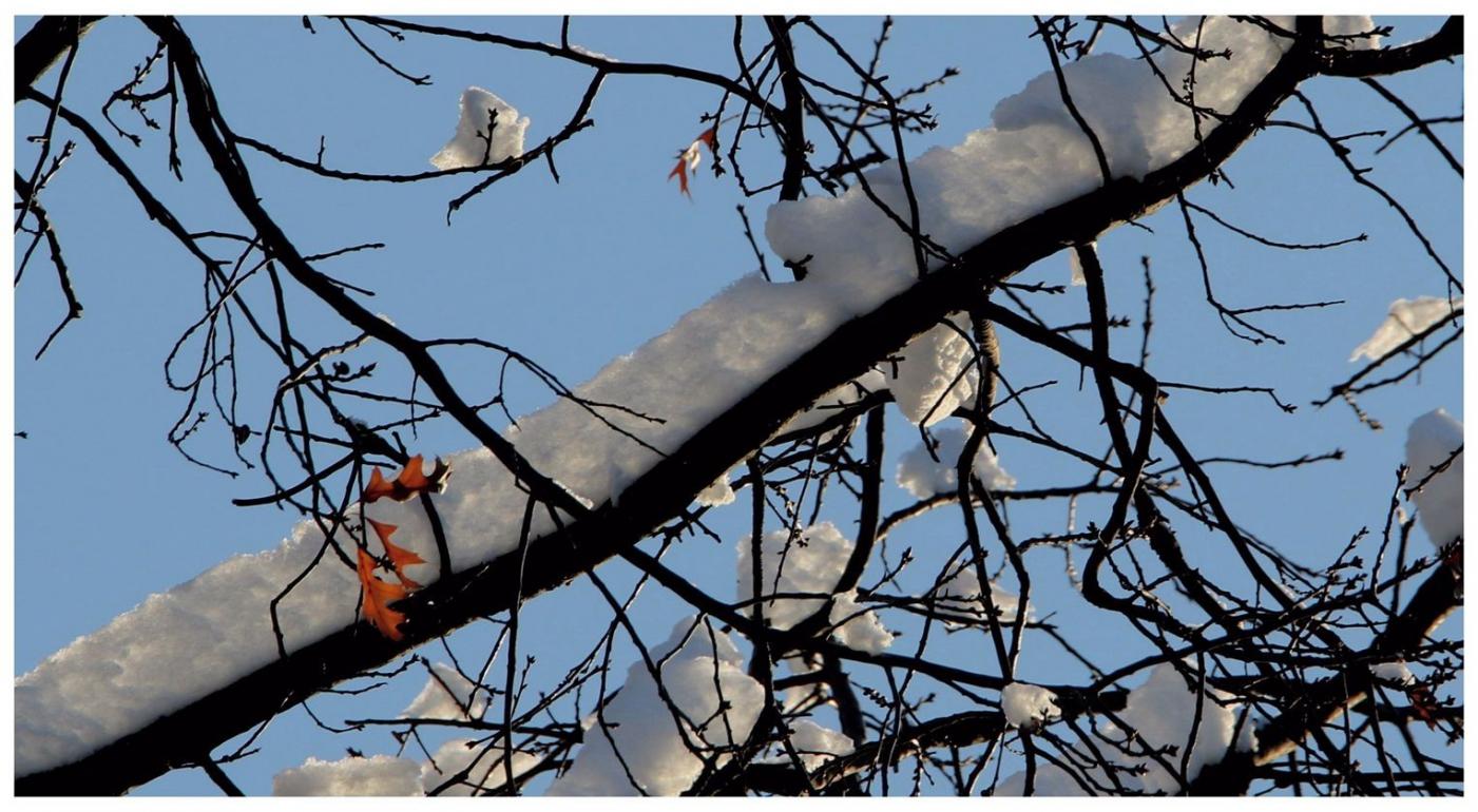 纽约地区入冬首雪景色迷人_图1-31