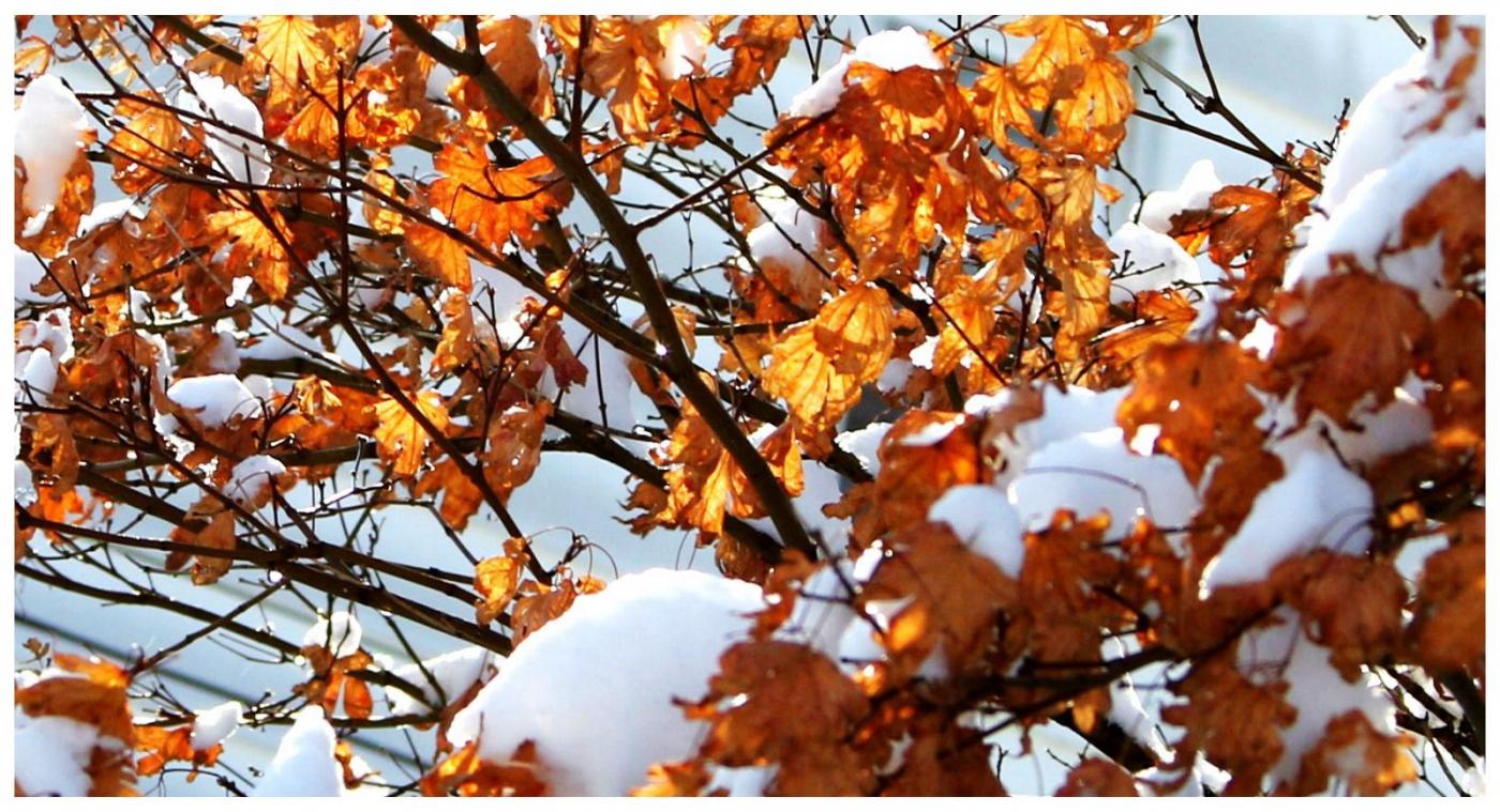 纽约地区入冬首雪景色迷人_图1-33