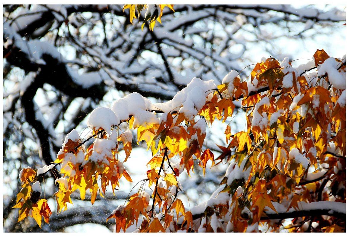 纽约地区入冬首雪景色迷人_图1-35
