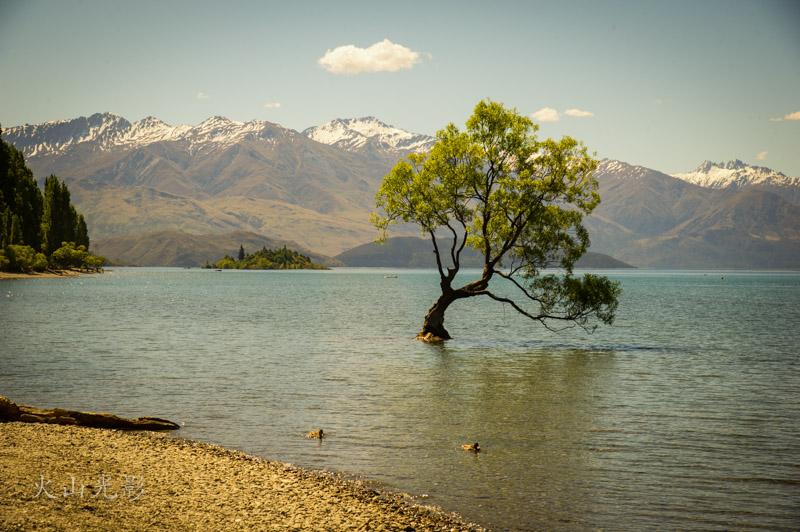 新西兰掠影(二)_图1-4