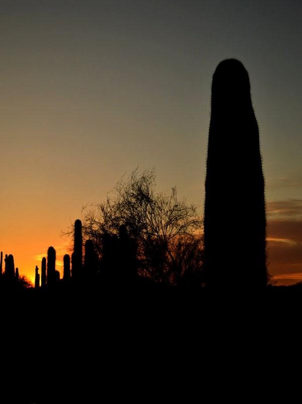 凤凰城之日落与雕塑_图1-10