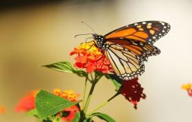 花儿与蝴蝶