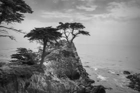 加州17英里,标志性的松柏树