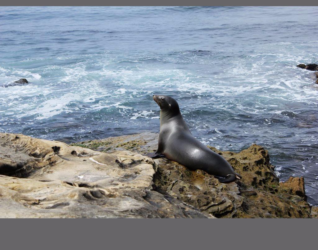 圣地亚哥海豹