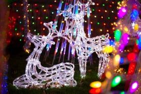 【爱摄影】祝博友们圣诞快乐