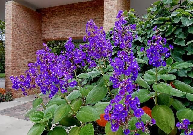 English Garden 花園_圖1-2