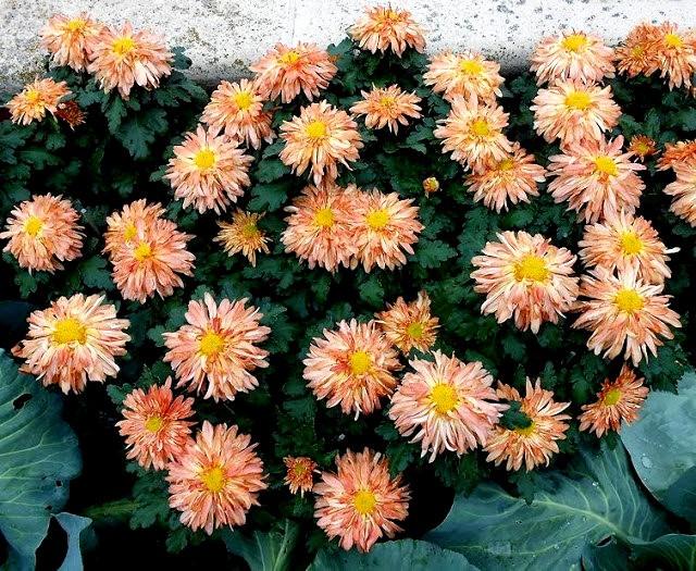 English Garden 花園_圖1-3
