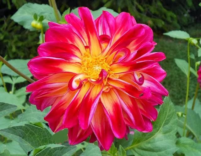 English Garden 花園_圖1-5
