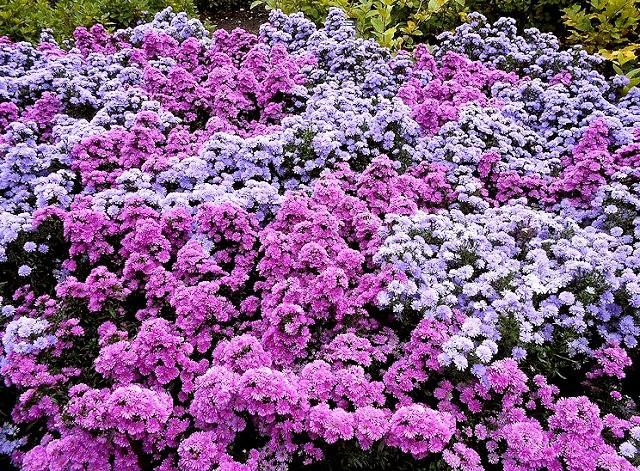English Garden 花園_圖1-9