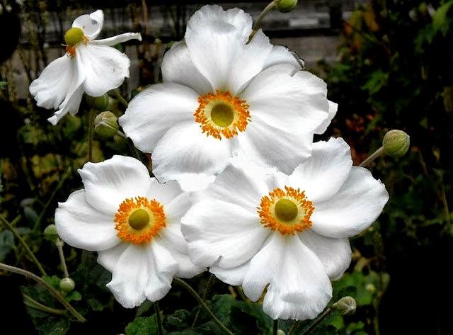 English Garden 花園_圖1-16
