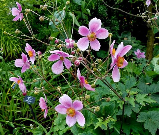 English Garden 花園_圖1-17