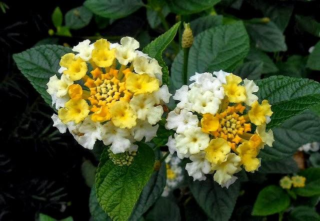 English Garden 花園_圖1-18