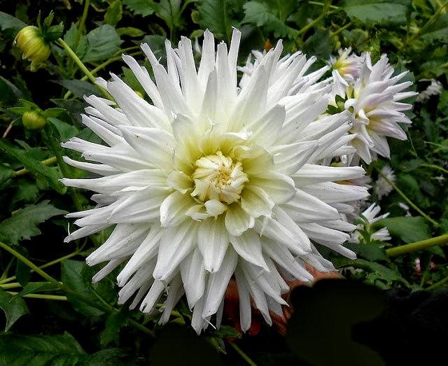 English Garden 花園_圖1-20