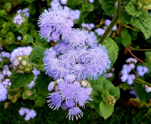 English Garden 花園_圖1-31
