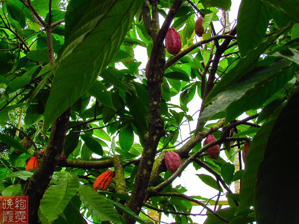 海南兴隆热带植物园_图1-6