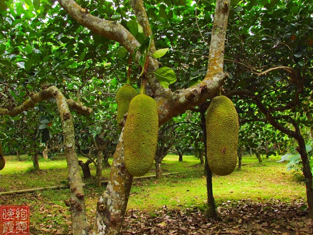 海南兴隆热带植物园_图1-5