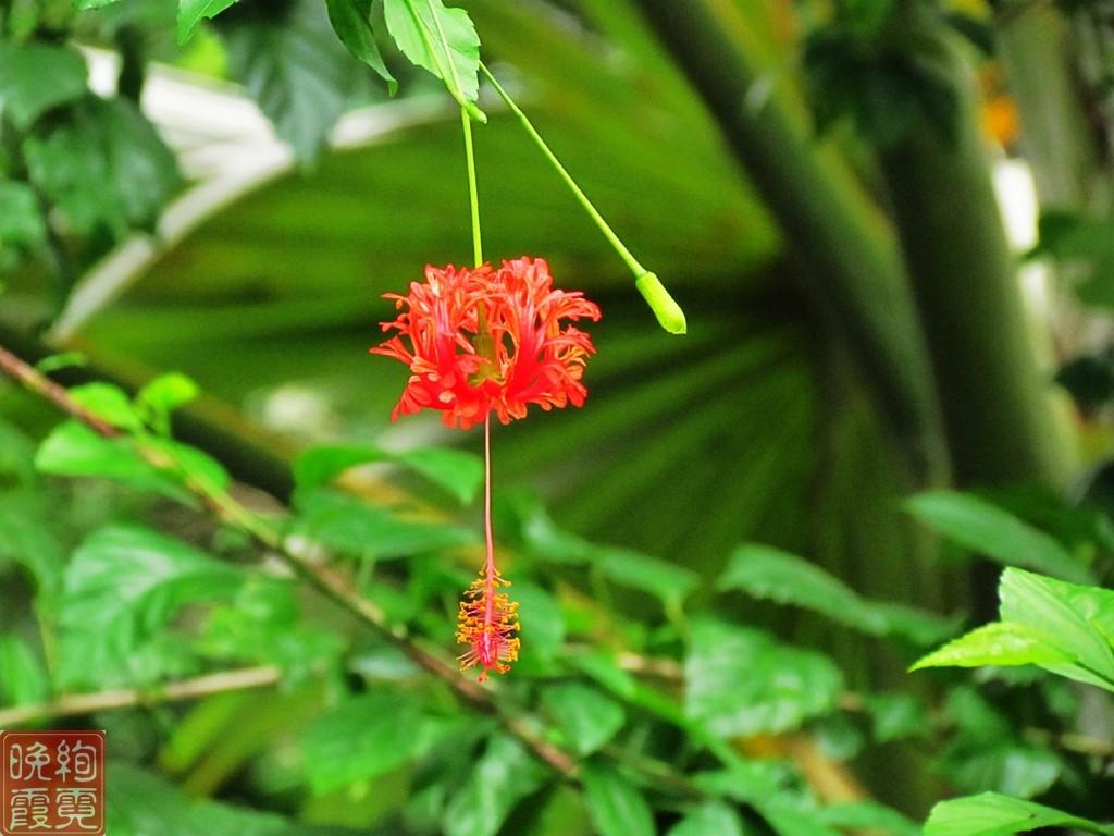 海南兴隆热带植物园_图1-11