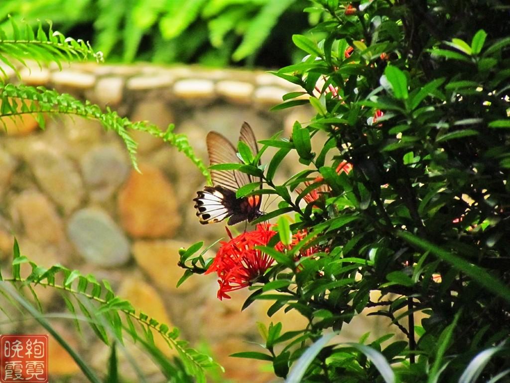 海南兴隆热带植物园_图1-12