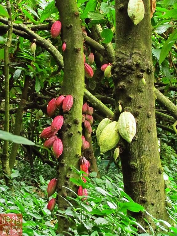 海南兴隆热带植物园_图1-8