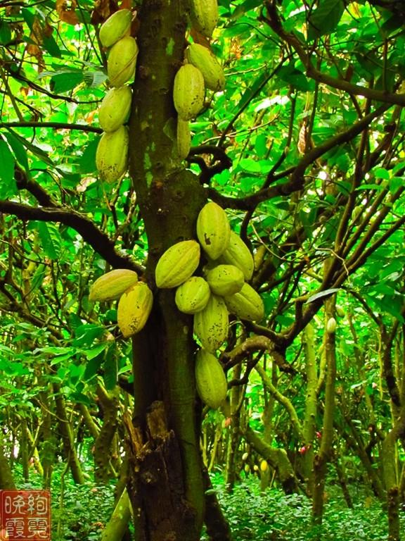 海南兴隆热带植物园_图1-9