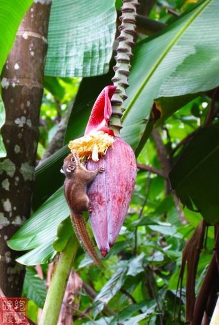 海南兴隆热带植物园_图1-13