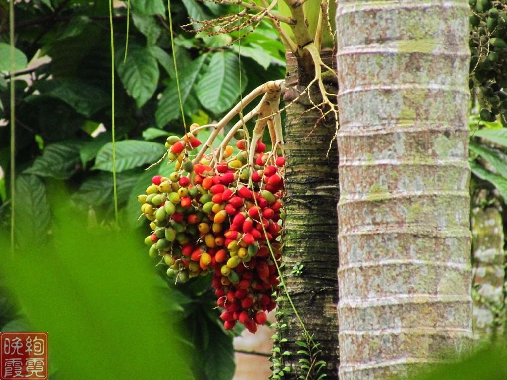 海南兴隆热带植物园_图1-14
