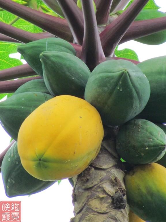 海南兴隆热带植物园_图1-18