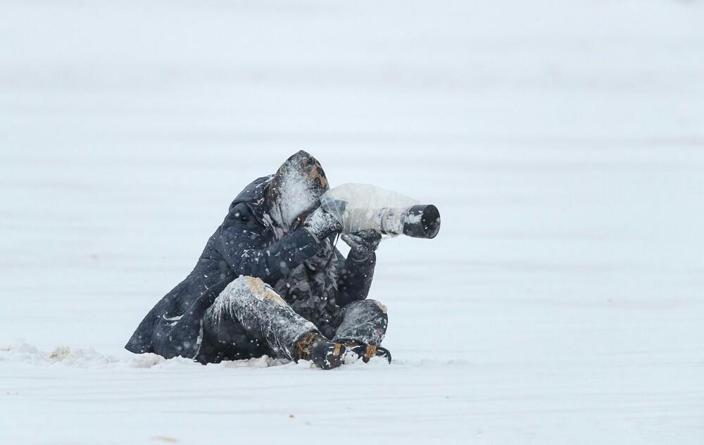【田螺摄影】它坐着我坐着~抓拍雪猫鹰的萌态_图1-2