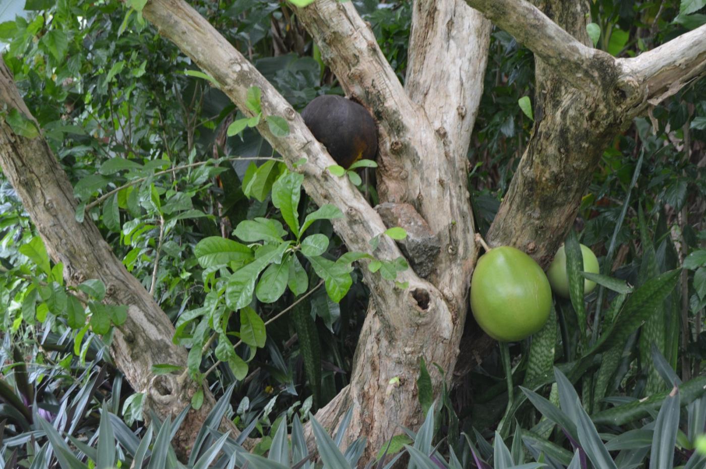 牙买加奥乔里奥斯_图1-24