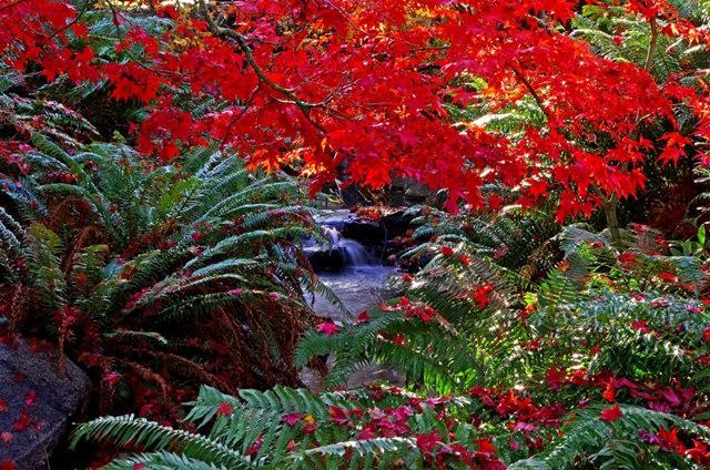 加拿大Italian Garden 花园_图1-6
