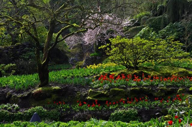 加拿大Italian Garden 花园_图1-11