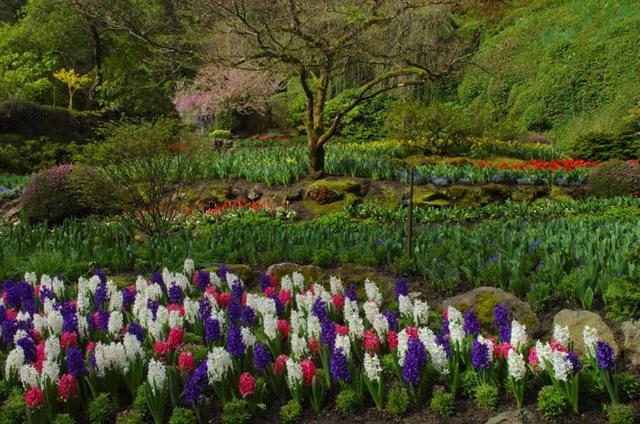 加拿大Italian Garden 花园_图1-15
