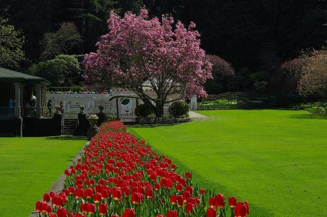 加拿大Italian Garden 花园_图1-16