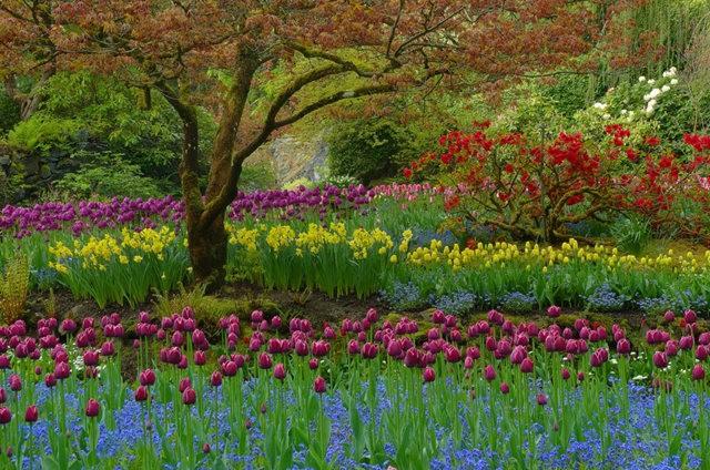 加拿大Italian Garden 花园_图1-17