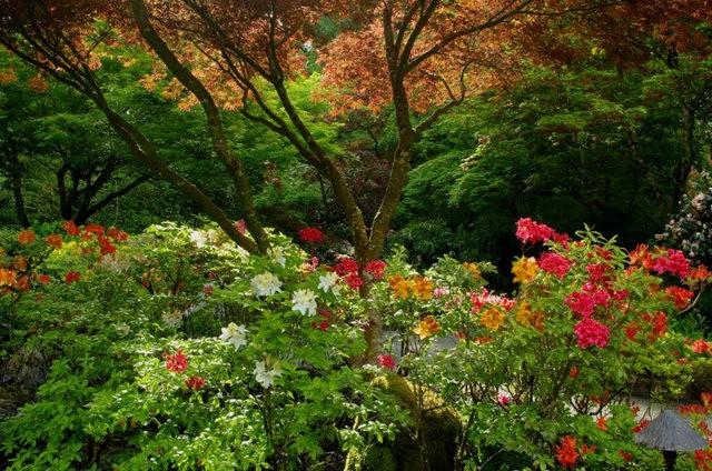 加拿大Italian Garden 花园_图1-22